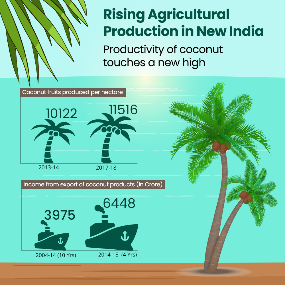 Productivity of Coconut